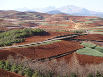 Red field in Yunnan Stock Images