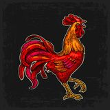 Red fiery rooster. Vintage black vector engraving illustration. Red fiery rooster. Symbol Chinese 2017 new year. Vintage color drawn vector engraving Royalty Free Stock Images