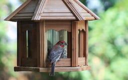 Red Finch bird feeder Stock Photos