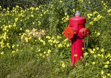 Red fire extinguisher stands out among a green lawn with lots of royalty free stock photo