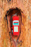Red fire extinguisher in the tree royalty free stock photography