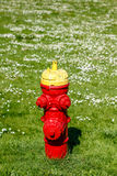Red fire hydrant in a flower field Royalty Free Stock Images