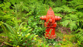 Red Fire Hydrant in Lush Forest of Green Ferns Royalty Free Stock Photo