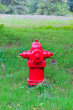 Red fire hydrant in park Royalty Free Stock Images