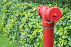 Red fire hydrant surrounded by green grass.  Stock Photo