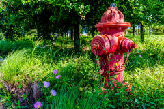 Red Fire Hydrant and Texas Wildflowers Stock Images