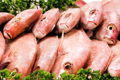 Red fish. On ice at the market Royalty Free Stock Image