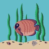 Red fish. Funny red fish swims in the sea Stock Images