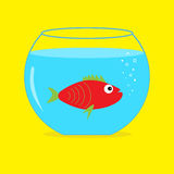 Red fish in the aquarium. Card. Royalty Free Stock Photo