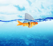Red Fish  as shark Royalty Free Stock Images