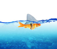 Red Fish as shark stock image