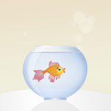 Red fish in the bowl. Illustration of red fish in the bowl Stock Photos