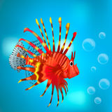 Red fish among the bubbles. Red fish on a blue background Stock Image