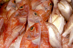 Red fish on food market