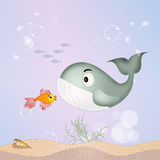 Red fish and hole Royalty Free Stock Photos