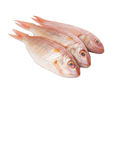 Red Fish II Royalty Free Stock Images