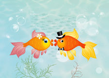 Red fish in love. Illustration of red fish in love Stock Image