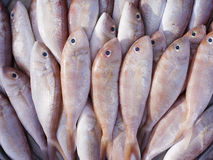 Red fish in the market. Stock Photography