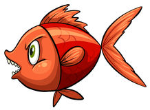 Red fish. One red fish on a white background Royalty Free Stock Image