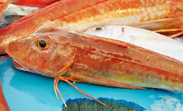 Red fish for sale Royalty Free Stock Photo