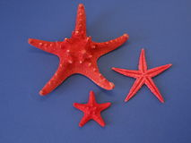 Red fish stars Royalty Free Stock Photos