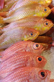 Red fishes o. N the market Stock Photos