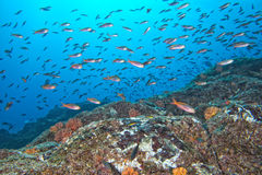 Red fishes on reef on the deep blue ocean Royalty Free Stock Photography