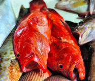 Red fishes for sale in the public market Stock Image