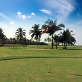 Red flag in the field for golf with palm trees. Royalty Free Stock Images