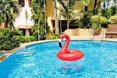 Red flamingo in a swimming pool. Copy space. Red flamingo in a swimming pool. Copy space stock photo