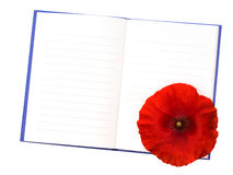Red Flanders poppy on notebook, isolated on white. War remembranc Stock Photo