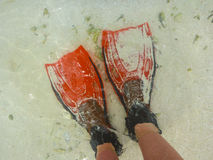 Red Flippers Royalty Free Stock Image