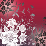 Red floral background Royalty Free Stock Photos
