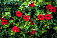 Red Floral Background, Brightly coloured. Natural background Royalty Free Stock Photos