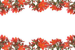 Red floral design border Royalty Free Stock Photography