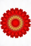 Red floral kaleidoscope Stock Images
