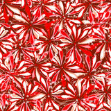 Red floral pattern. Romantic red floral seamlesss pattern Stock Image