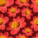 Red floral seamless pattern Stock Photography