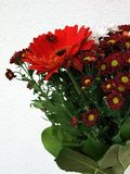 Red flower. Flowers composition in the light bacground Royalty Free Stock Photography