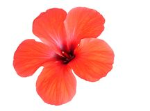 Red flower. Stock Photo