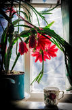 Red flower. On the windowsill and a cup Royalty Free Stock Photos