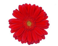Red flower Stock Photos
