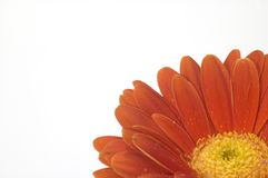 Red flower. In the right bottom corner Royalty Free Stock Images