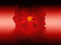 Free Red Flower Royalty Free Stock Images - 4550859