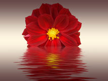 Red flower. With watter effect stock photography