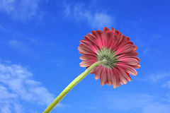 A red flower against the sky background Stock Images