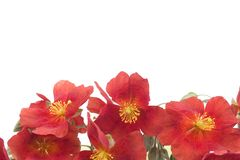 Red flower background 1. Group of red flowers, space for text Stock Photo