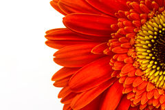Red flower background Stock Image