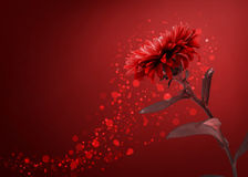 Red flower background Stock Photos