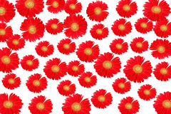 Red flower. Background and texture Royalty Free Stock Photo